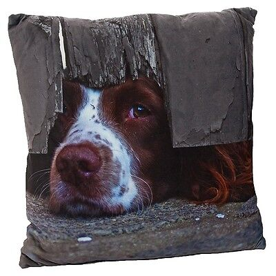 I Spy Spaniel Dog Cushion By Country Matters with Super Soft Feel