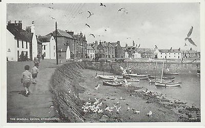 Early Postcard -Stonehaven - The Seagull Haven - Scotland   -Real Photo