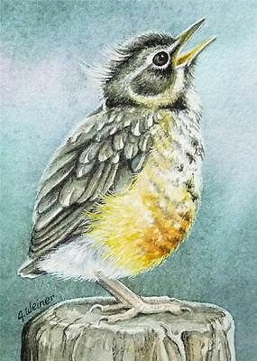 ACEO Limited Edition Print Baby Robin Bird Fledgling by J. Weiner