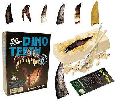Dino Teeth Dig & Discover Excavation Kit Paleontology 1:1 Scale Dinosaur