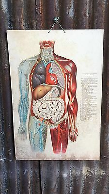 Vintage Anatomy Bulgarian Skeleton School Medical Science Poster Double Sided