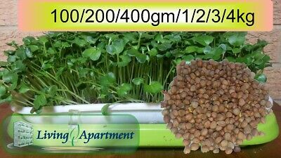 Radish Sprout seeds Daikon ( Sprouts , Sprouting seeds )