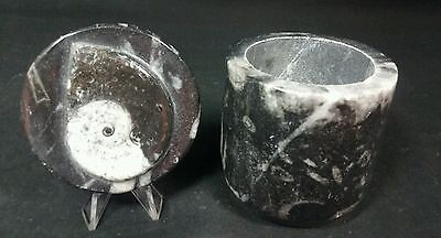 """2.75"""" Tall ORTHOCERAS Fossil Polished Lidded container."""