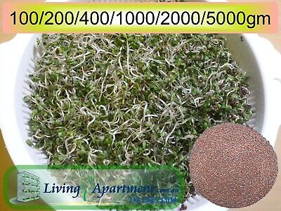 Broccoli Sprout seeds Organic Certified 100g 400g 2kg