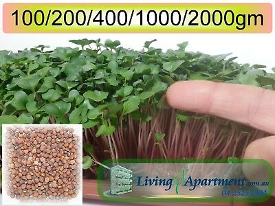 Radish Sprout seeds Red Arrow 100g 200g 400g 2kg