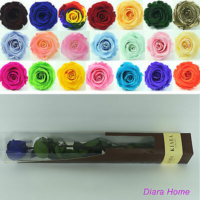 Blue Single Rose Preserved 100% Fresh Natural Real Flower last 3 years no water