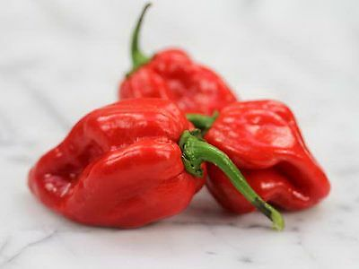 Red Habanero Chilli (25 Seeds)