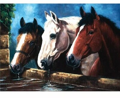 Three of a Kind by Royal & Langnickel 3 Horses Drinking - Painting by Numbers