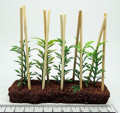1:12th Scale Growing Runner Beans Dolls House Miniature Garden, Accessory