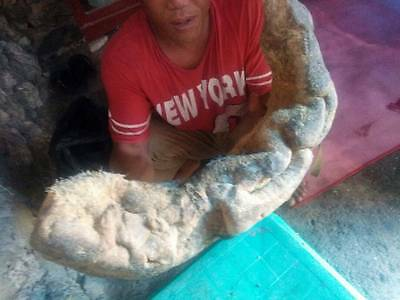 Ambergris from Indonesia. 1kg=USD9500