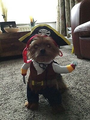 Dog outfit pirate costume size S