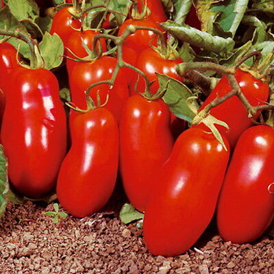 San Marzano Heirloom Tomato (150 Seeds)