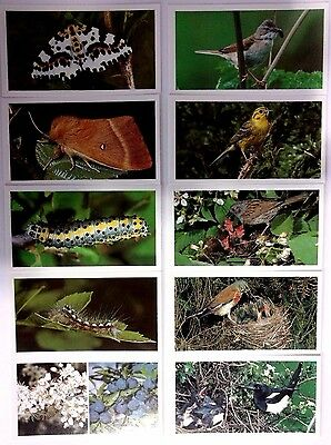 RSPB Collectables | Britain's Wayside Wildlife | Complete Set of 30 [01225]