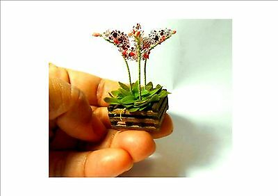 AWESOME!!! Mini Bonsai Orchid Seeds Indoor Home Miniature Flower Pot, 200Pc