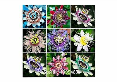 PROMO!!! Beautiful Passion Flower Seeds, Mixed Colours, 100PCS