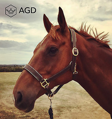 AGD Goldline' Brown leather horse halter with gold leather piping & brass. FULL