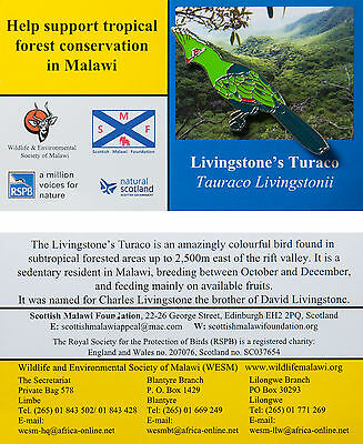 RSPB Pin Badge | Livingstone's Turaco | International Malawi BL Partner [00675]