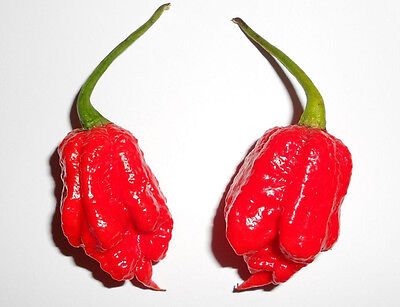 10 Seeds CAROLINA REAPER (AKA HP22B) Sharper as Moruga Current WORLD RECORD