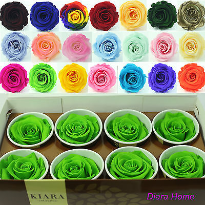 8 Green Glow Rose Preserved 100%  Natural Real Flower any Ocasion Birthday gift