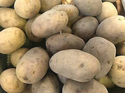 Premium 2017 NADINE Second Early Seed Potatoes pack of 5 or 10