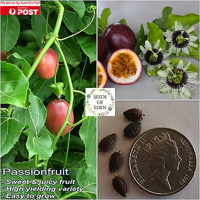 15 PASSIONFRUIT PANAMA RED SEEDS(Passiflora edulis); high yielding variety