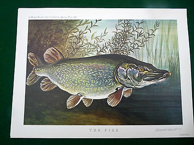 Bernard Venables print signed The Pike fishing colour print A4
