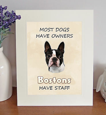 "Boston Terrier 10x8"" Free Standing ""Bostons Have Staff"" Picture Fun Novelty Gift"