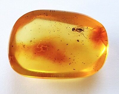 Genuine Baltic Amber  With Inclusion Insects