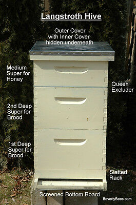 Learn Beekeeping & Build Your Own Beehive Bee Hive Plan Plans Manual Lesson