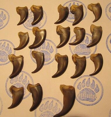 Brown Bear FAUX CLAWS PACK 29-41mm length. 18 PCS