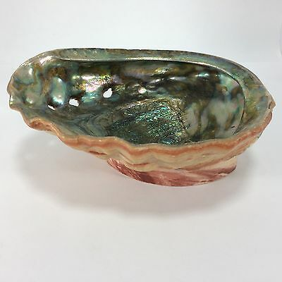 Large Abalone Iridescent Natural Shell Display On Base Resin Pink 0.868kg 22cm