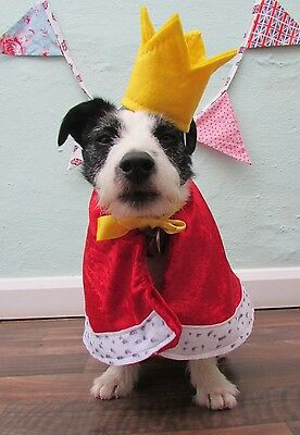 Little Dogs Fancy Dress King for a day costume handmade by Mrs Nibbles