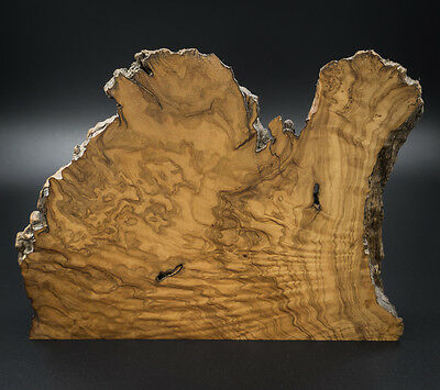 A Unique Ornamental Slice of Olive Wood (2)