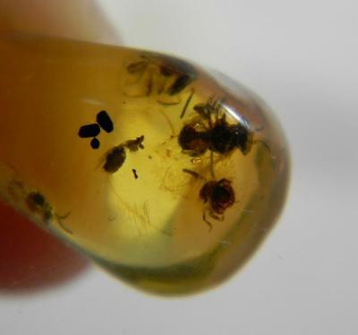 Amber Dominican Republic Fossil Stingless Bee Insect Stone Collectible Rare 0.6g