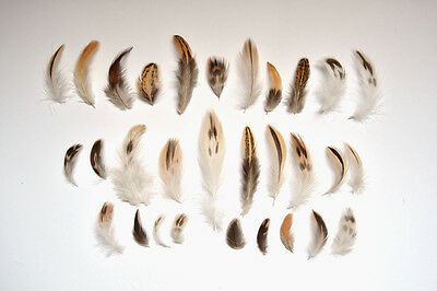 50 Natural Black Brown Cream White Feathers Bird Small Mixed Spotted Tan 3-10cm