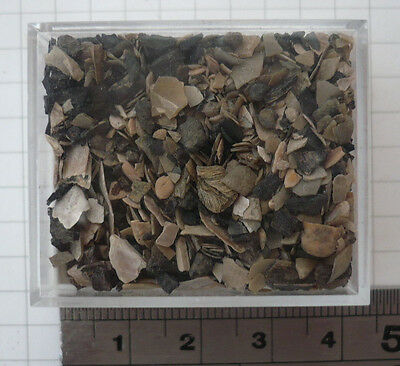 Fossil Shell Lens Matrix, Teeth, Otoliths, Forams, London Clay, Sheppey, Uk