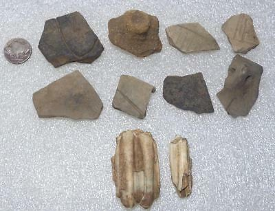 rare sherds with different lugs+animal tooth european LBK Neolithic ca. 4800 BC