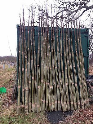 100 x 6.5ft (2m)  FAST GROWING Willow Whips for Living Structures. FREE P&P