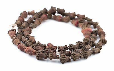 African Clove-Shaped Aromatic Moroccan Eucalyptus Beads Morocco