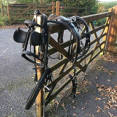 webster large pony carriage driving harness