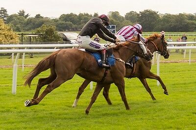 """@@ WIN £500-PLUS A WEEK With The """"WINNERS GALORE"""" Horse Racing Betting System@@"""