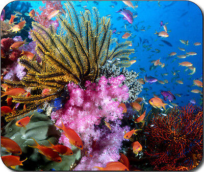 Tropical Fish Aquatic Marine Life Coral Reef Large Mousepad Mouse Pad Great Gift