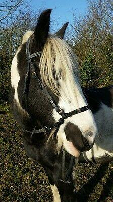 Twisted Bitless bridle x under attachment by Noseropes