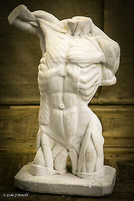 Plaster Life Size Male Torso Anatomical Figure