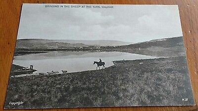 Vintage Postcard - BRINGING IN THE SHEEP AT THE TARN MALHAM