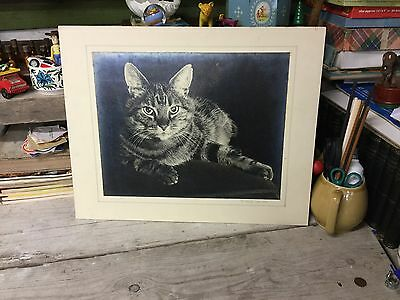 """Old Mounted Black & White Photograph Of """"Monty The Cat"""""""