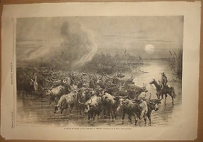A Drove of Texas Cattle Crossing a Stream - Harper's Weekly, October 19, 1867