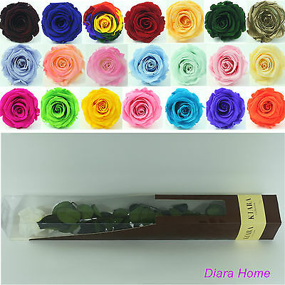 White Single Rose flower Preserved 100% Fresh Natural Real last 3 years no water
