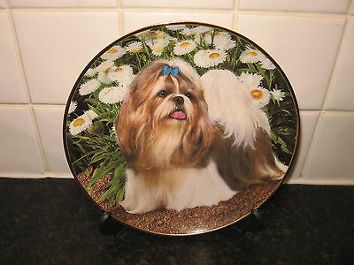 Shih Tzus Dog   Plate - Picture Perfect   - Danbury Mint