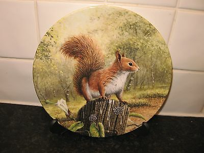 Natures Little Favourites  Plate   -Red Squirrel  -  Bradford Exchange